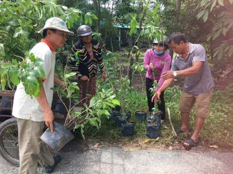 Vận động trồng 8.356 cây xanh, trong đó có hơn 1.000 cây bóng mát