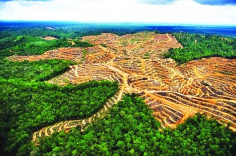 Nền nông nghiệp Malaysia ngày càng tụt hậu