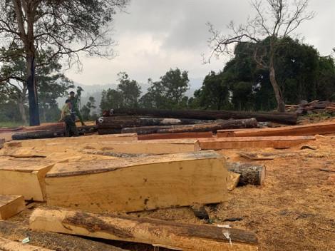 Bắt 10 đối tượng phá rừng, vận chuyển gỗ lậu