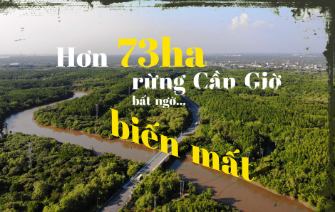 Hơn 73ha rừng Cần Giờ bất ngờ… biến mất