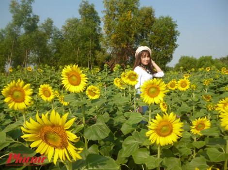 Cuối tuần tha hồ 'sống ảo' trong vườn hoa hướng dương quận 9