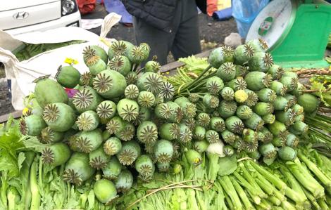 Cây thuốc phiện bày bán như rau ở chợ biên giới Việt - Lào