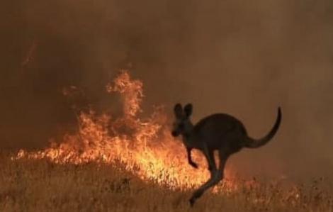 24 người bị buộc tội cố ý gây thảm họa cháy rừng ở Úc