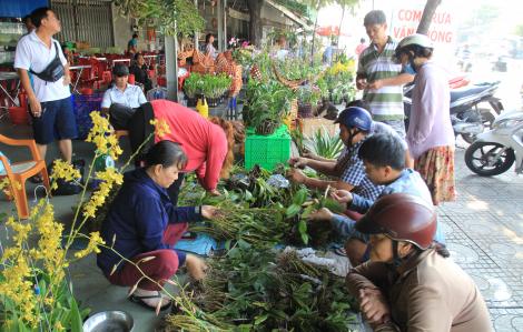 Lan rừng Campuchia bán như rau trên vỉa hè Sài Gòn những ngày giáp tết