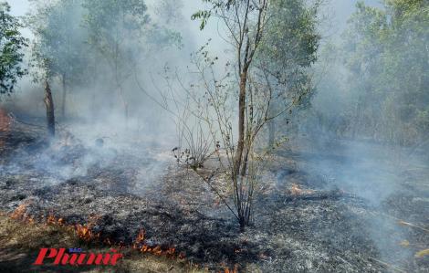 Lửa thiêu rụi gần 10ha rừng tràm ở Bình Phước