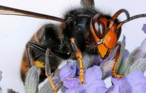 Một thanh niên bị ong mặt quỷ đốt nhập viện