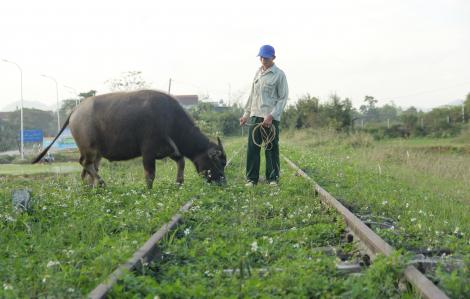 Chi tiền tỷ bảo vệ tuyến đường sắt cả thập kỷ không có tàu chạy