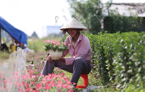 Làng hoa tết tại Sài Gòn tất bật vào vụ