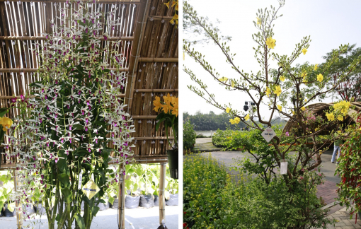 Hội thi hoa cảnh - Sân chơi hội tụ 'tinh hoa' của các nghệ nhân và nhà vườn