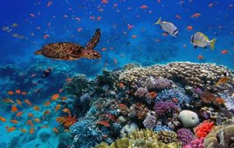 Liên Hiệp Quốc cảnh báo thế giới còn 10 năm để ngăn chặn nạn đại tuyệt chủng