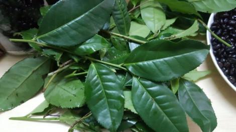 Uống trà xanh 3 lần mỗi tuần giảm nguy cơ tử vong sớm 20%