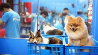 Dịch vụ chăm sóc, nuôi giữ thú cưng 'lên ngôi'
