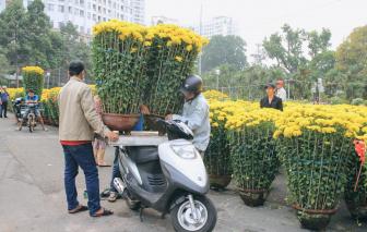 Chậu cúc cao vượt đầu người, hơn chục triệu một cặp hút khách tại Sài Gòn