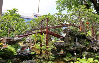 Gốc ổi bonsai giá 1,2 tỷ đồng tại Hội hoa xuân Phú Mỹ Hưng