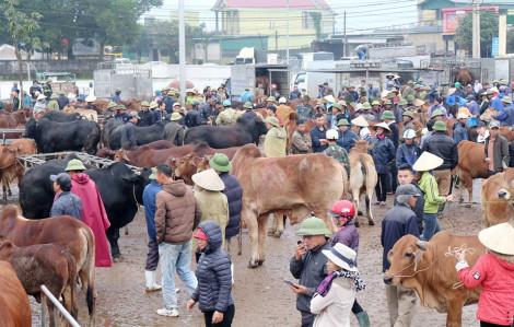 Chợ trâu bò lớn nhất miền Trung sôi động phiên cuối năm