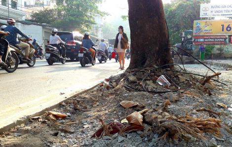 Vì sao cây xanh Sài Gòn sợ … Tết?