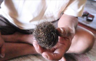 Mổ heo ngày 30 tết thấy…cát lợn hiếm gặp