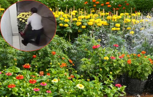 Đi ô tô sang trọng trộm hoa: Không nghèo tiền bạc, chỉ nghèo nhân cách