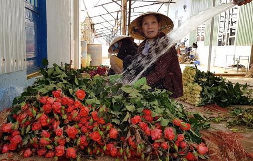 Giải cứu hoa hồng ngày... Valentine