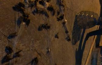 Cận cảnh người đàn ông bắt chim trời ở Kiên Giang khiến người xem phản ứng